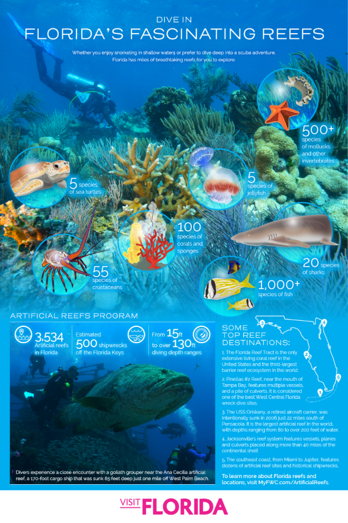 10 Great Spots For Snorkeling And Scuba Diving In Florida | Visit - Florida Keys Snorkeling Map