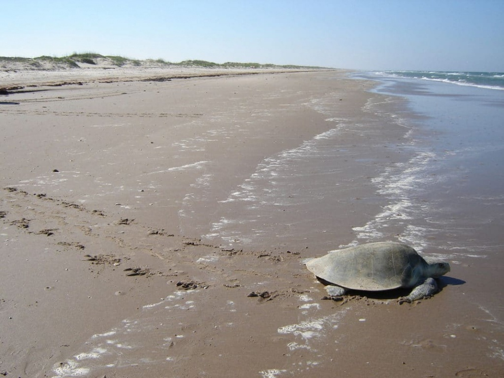6 Best Beaches In Texas To Beat The Heat - Trekbible - Best Texas Beaches Map