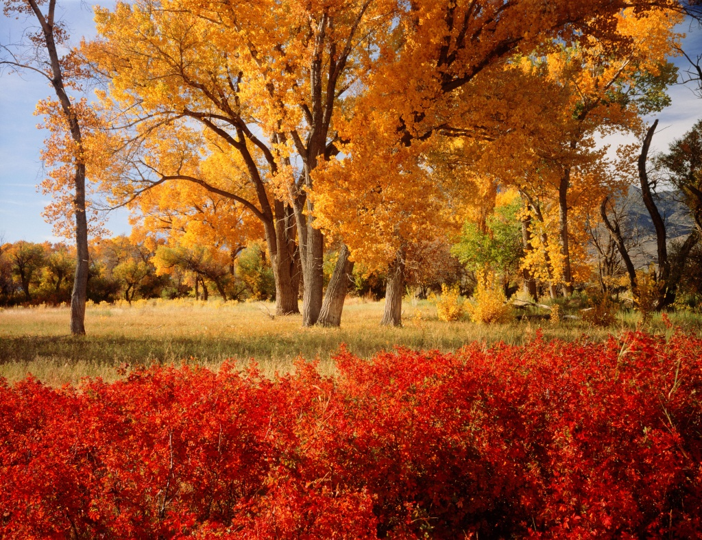 A State-By-State Guide To Fall Colors - California Fall Color Map