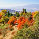 Best Places For California Autumn Leaves | Visit California   California Fall Color Map 2017