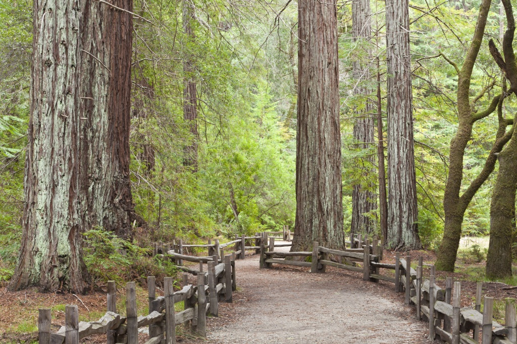 California Redwood Forests: Where To See The Big Trees - Redwood Forest California Map