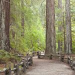California Redwood Forests: Where To See The Big Trees   Where Is The Redwood Forest In California On A Map