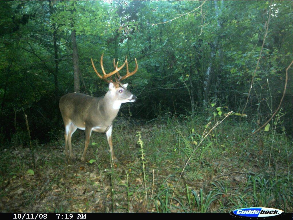 Exclusive: Peak 2016 Rut Forecast For Southern Deer Hunters - - Deer Rut Map Texas