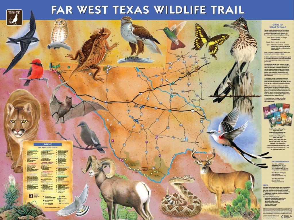 Far West Texas Wildlife Trail Debut Marks Milestone - Ride Texas - Texas Birding Trail Maps
