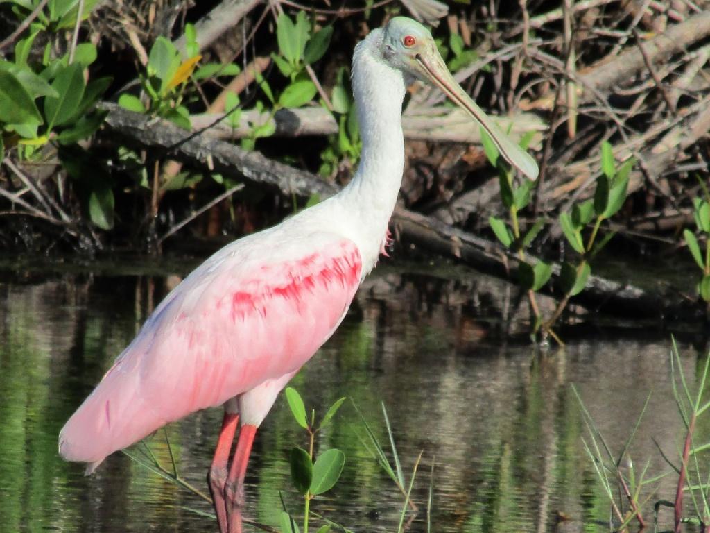 Florida's Birding Passion - Great Florida Birding Trail Map