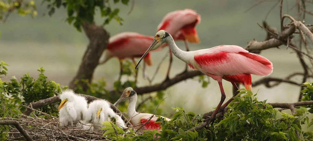Great Texas Wildlife Trails - Wildlife - Texas Parks & Wildlife - Texas Birding Trail Maps