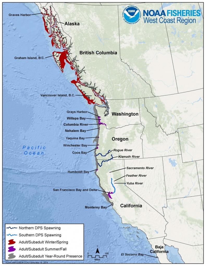 Green Sturgeon - Northern California Fishing Map