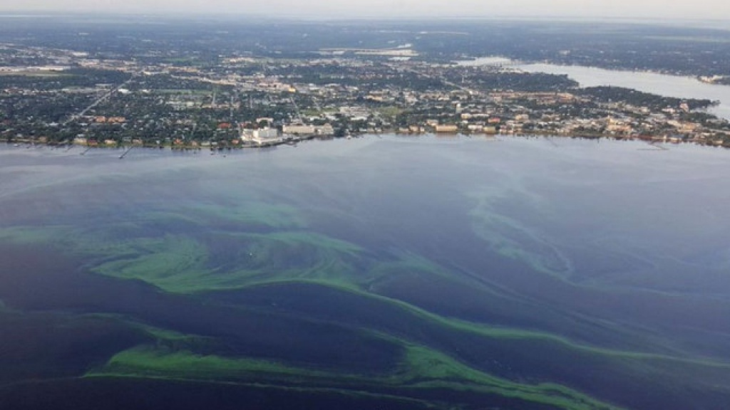 Interactive Map Shows Locations, Types And Toxicity Levels Of Algal - Toxic Algae In Florida Map