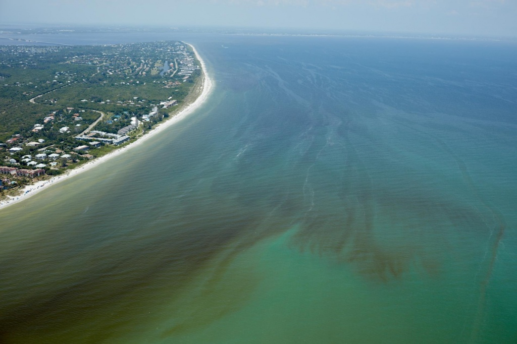 Red Tide Is Devastating Florida's Sea Life. Are Humans To Blame? - Florida Beach Bacteria Map 2018
