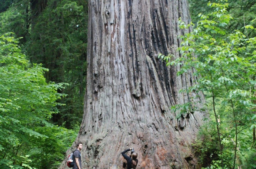 Ten Must See Redwood Trees - Giant Redwoods California Map